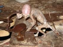 mexic-extraterestru-capturat-in-2007