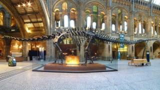 diplodocus-dippy-dinosaur-natural-history-museum-london