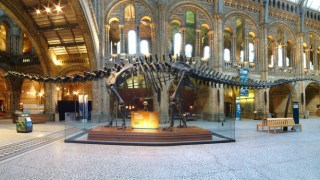 diplodocus-dippy-dinosaur-natural-history-museum-london