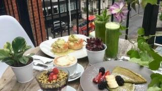 matcha-tea-terrace