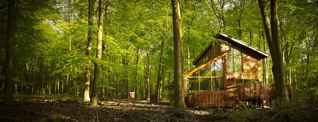 blackwoodforest