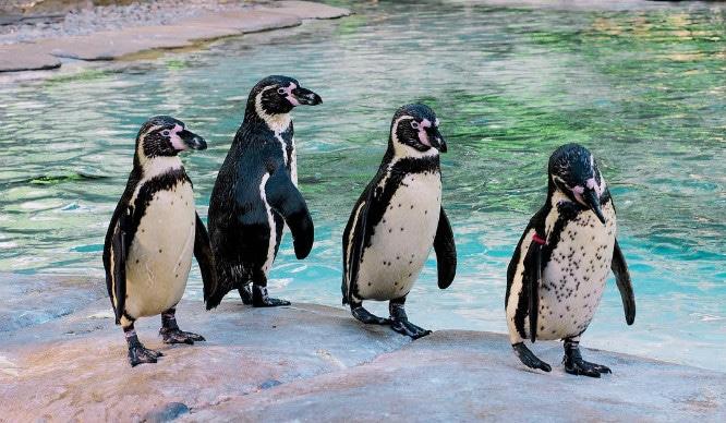 penguins-london