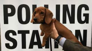 polling-station-dogs
