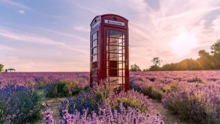 lavender-fields-feature