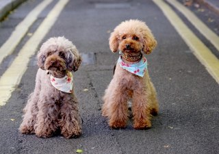 Dogs In London