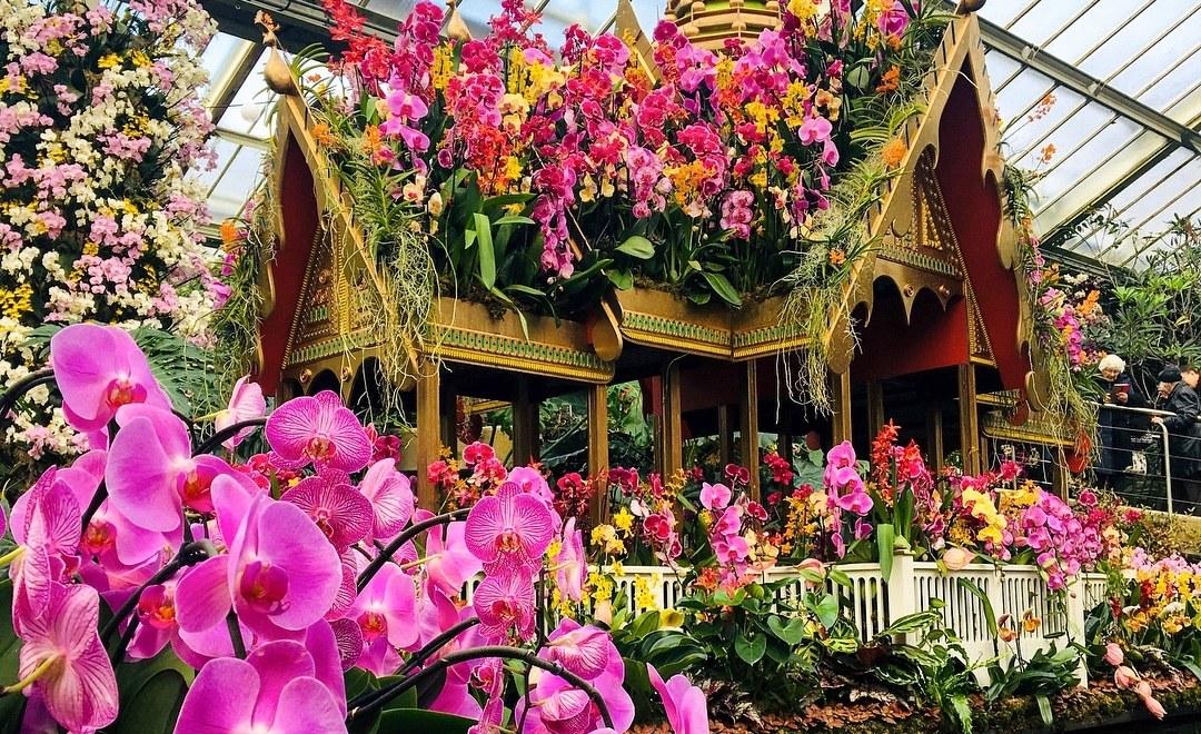 kew-gardens-orchids
