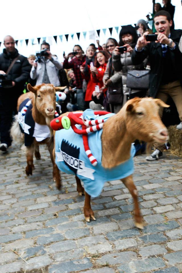 London Goat Race