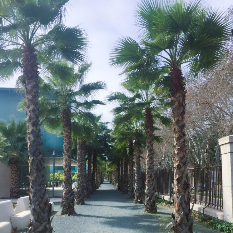 Palm trees in Malaga - Best things aboutMálaga