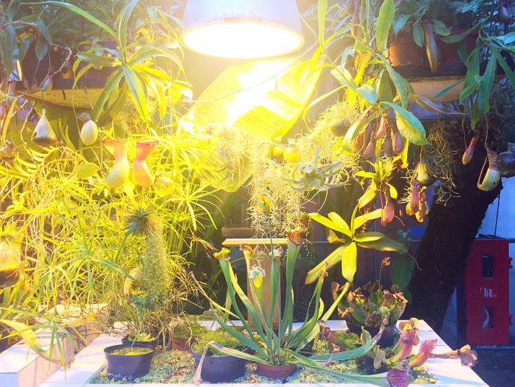 Exotic plants at Machines de l'Ile