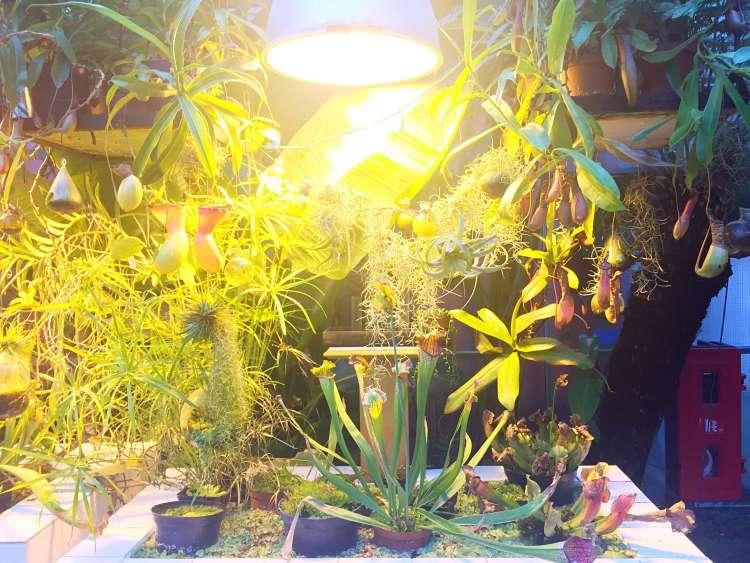 Exotic plants at Machines de l'Ile