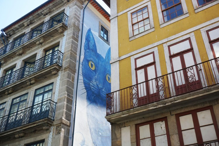 Blue cat - One week in Portugal