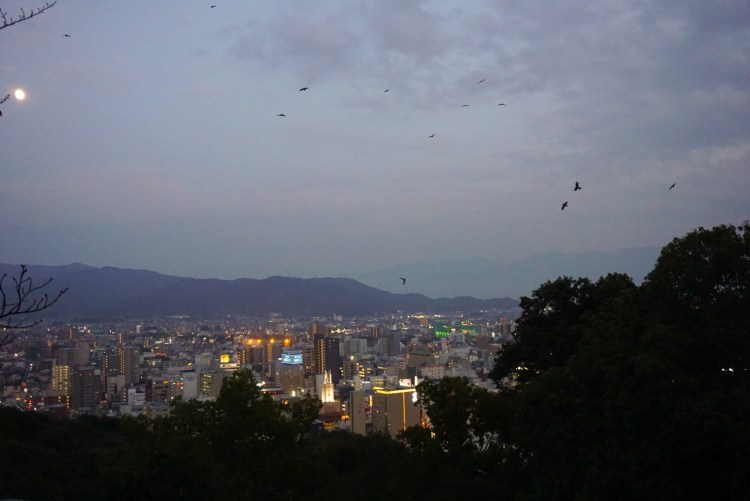 Night view of Matsuyama from castle