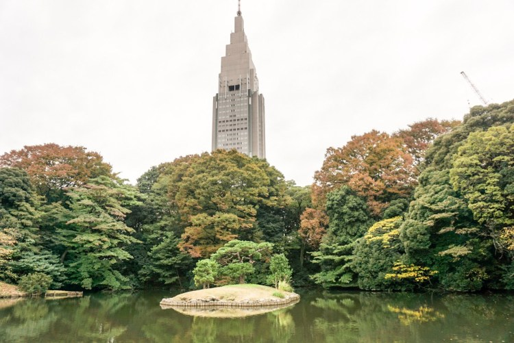 13 reasons to visit Japan in autumn: Visit Shinjuku Gyoen garden