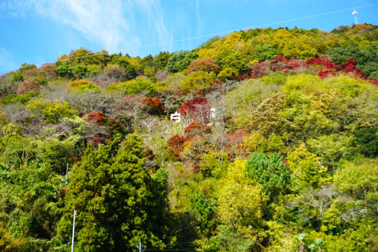 13 reasons to visit Japan in autumn : contrasting landscape