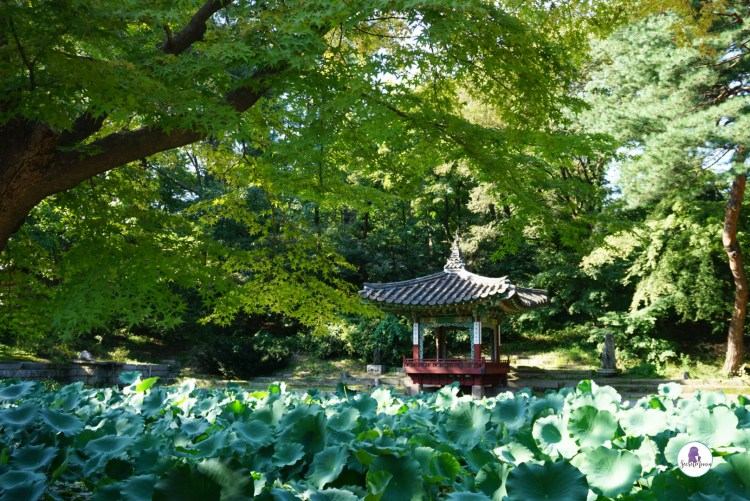 Palace Secret Garden - Three days in Seoul is the ideal amount of time to explore the modern yet traditional city. This Seoul 3 day itinerary explores all the things to do. #Seoul #SouthKorea #SeoulItinerary
