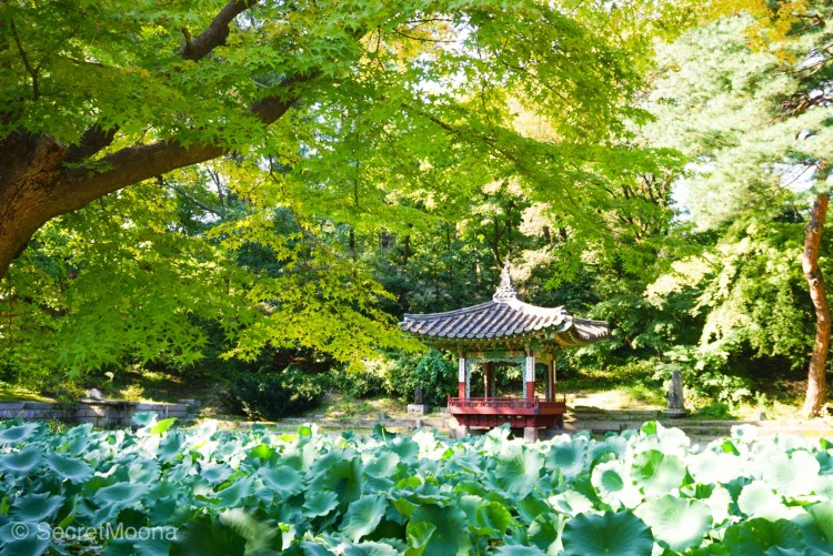 Aeryeonji Pond.Palace and its Secret Garden is one of the most well-preserved royal palaces from the Joseon Dynasty. The UNESCO World Heritage Site is a heaven of peace in buzzing Seoul.