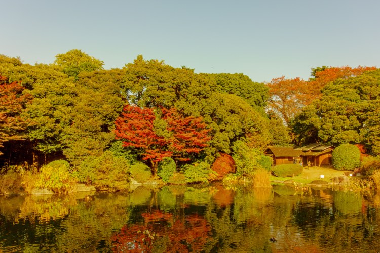 Autumn leaves, teahouse in Ueno Park - Tokyo