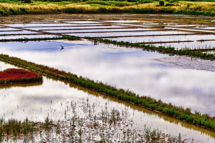 Guerande's salt marshes . Guide to the most picturesque and most impressive walled cities and towns in France.