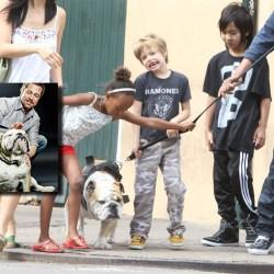 Honteux : Jacques, le chien du couple Brad Pitt / Angelina Jolie, abandonné sur le trottoir par les enfants.
