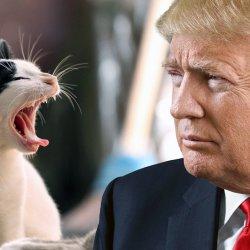 """""""Tu les prends par la chatte"""" : 30 millions d'amis porte plainte contre Donald Trump"""