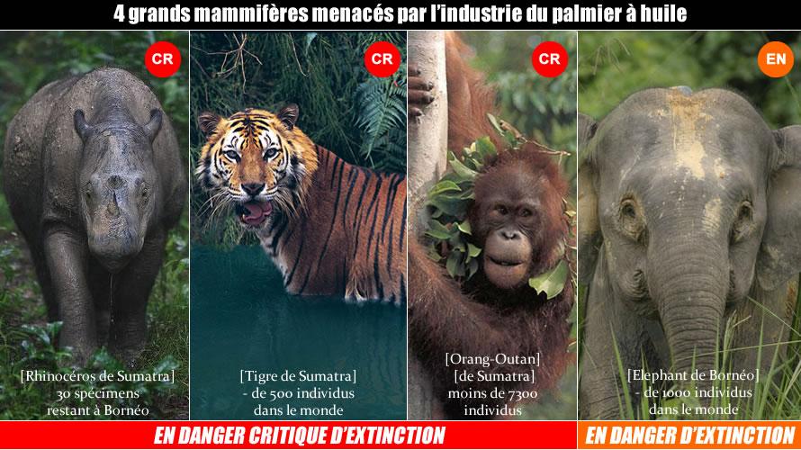 4mam Stop a l'huile de palme ! Utilisons l'huile de chêne, un produit français !