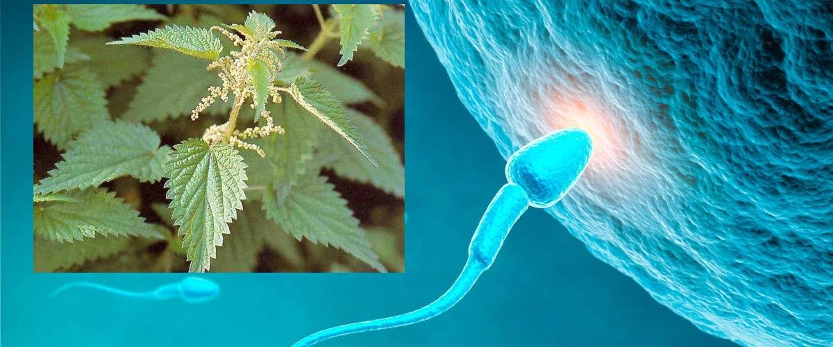 Se frotter les parties génitales avec des orties pour améliorer sa fertilité : Une astuce méconnue et pourtant éfficace