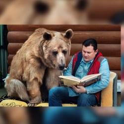 L'incroyable histoire de Marcel, cet ours qui apprend à lire à et à écrire à des analphabètes précarisés