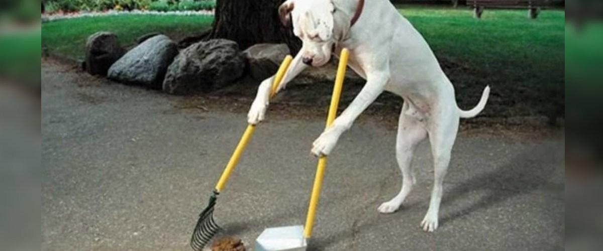 Paris : un stage pour apprendre aux chiens à nettoyer leurs déjections