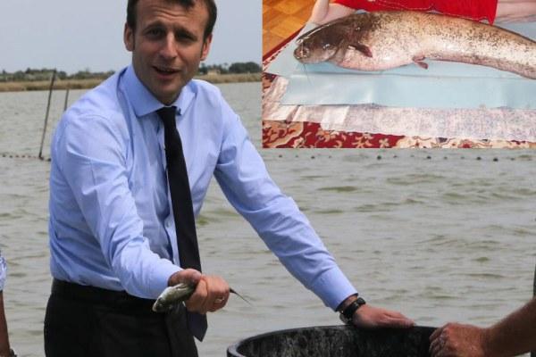 Emmanuel et Brigitte Macron ont adopté un poisson, baptisé Medor