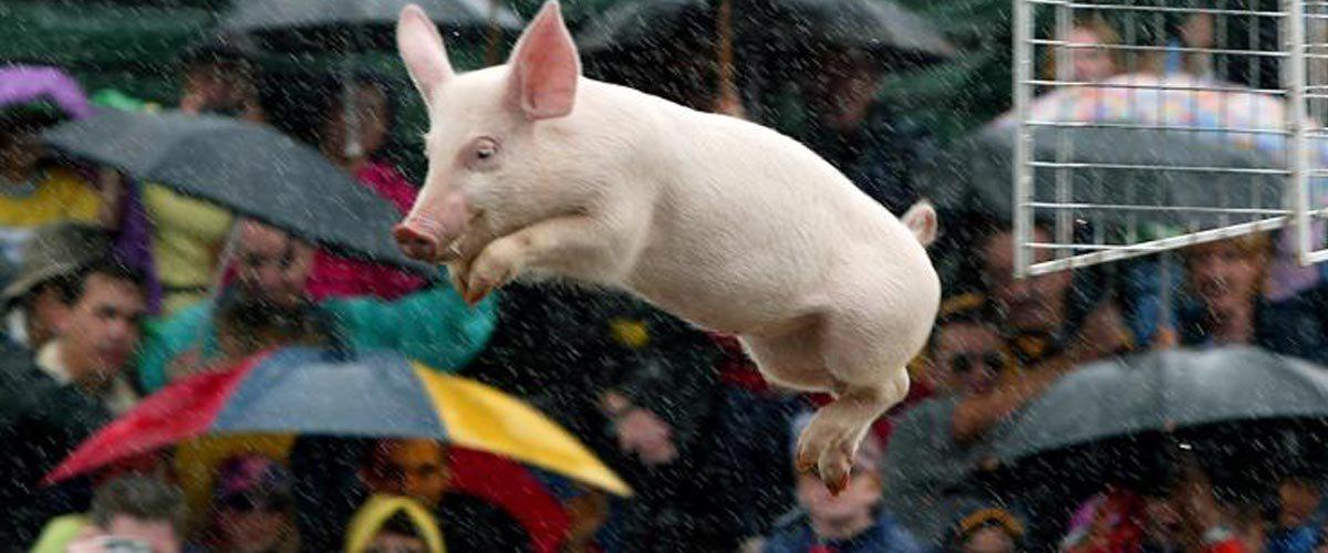 #Balancetonporc, oui, mais #regletacotisation : La Fédération Internationale du Lancer de Cochon dénonce un manque à gagner