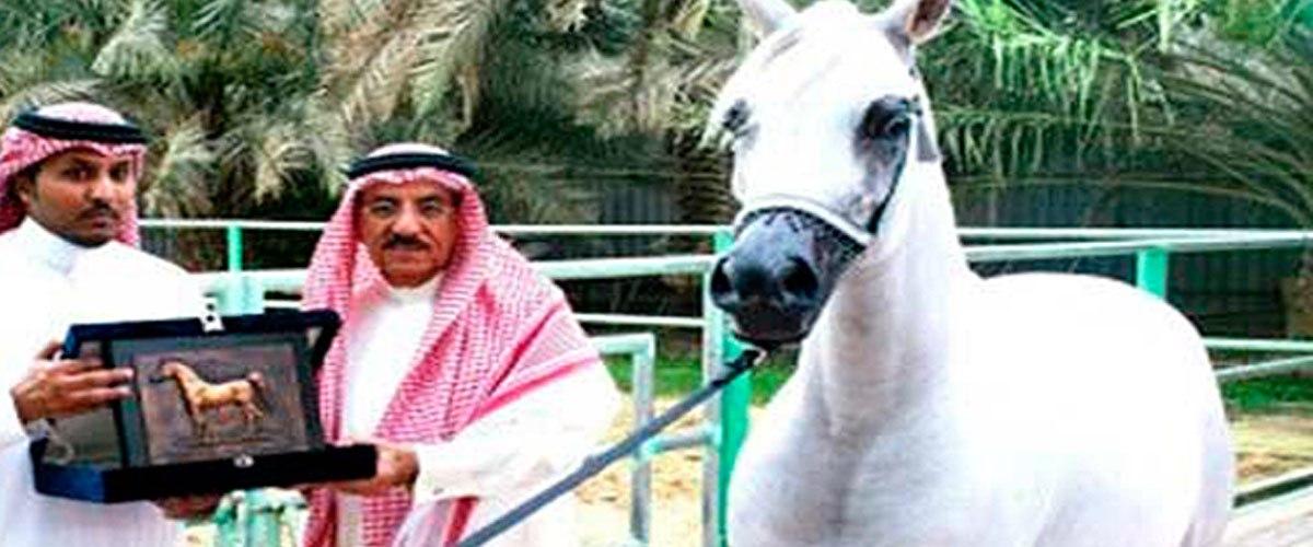 Arabie Saoudite : un cheval de course va être exécuté pour crime d'homosexualité