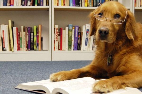 Des chiens apprennent à lire et à écrire dans un centre de recherche au Japon