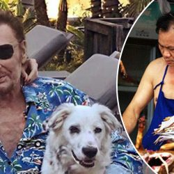 Cheyenne, le chien de Johnny Hallyday, acheté par un restaurant chinois
