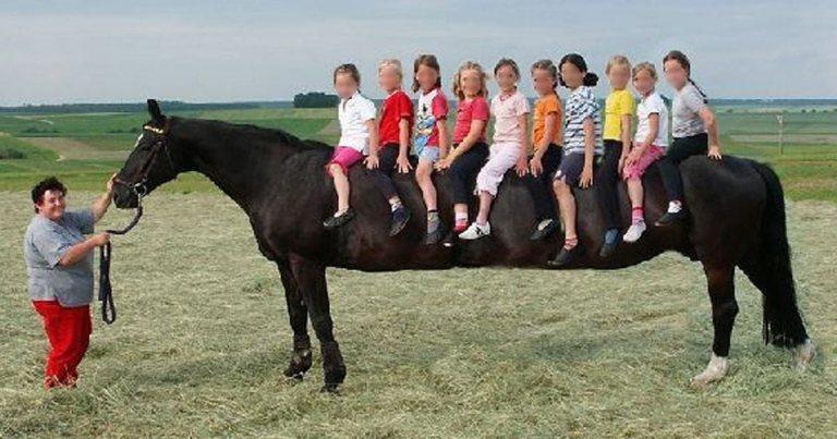 cheval-geant-ogm SecretNews