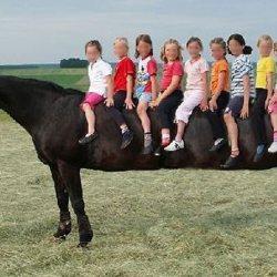 Pays-Bas : des chevaux génétiquement modifiés pour remplacer les cars scolaires