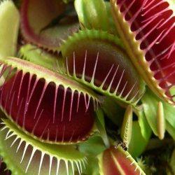 Une plante carnivore confie a un biologiste qu'elle veut devenir végane