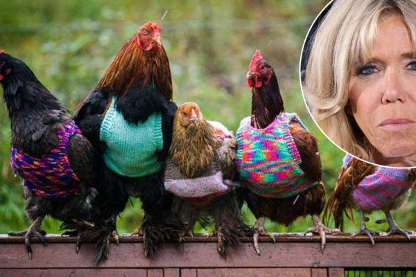 """Brigitte Macron tricote des vêtements pour aider les poules """"Sans Poulailler Fixe"""""""