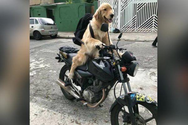 Un chien va faire le tour du monde en moto en solitaire pour soutenir la cause animale et le véganisme