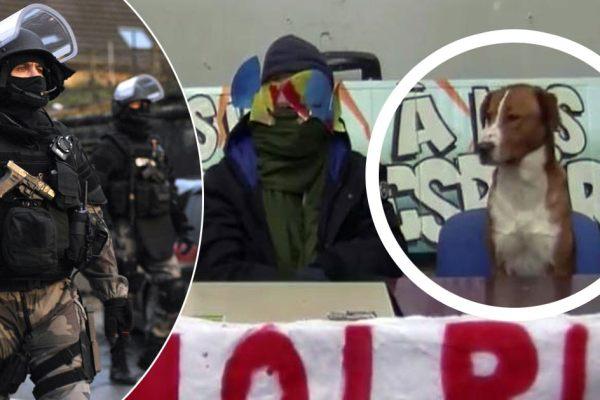 Universités – La BRI, le Raid et le GIGN vont lancer l'assaut pour libérer le chien pris en otage à Tolbiac