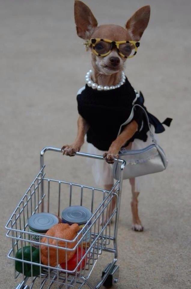 0f06351d08b922f69f92117b82fd81f1 DeliveDog : les chiens livreurs de repas débarquent en France