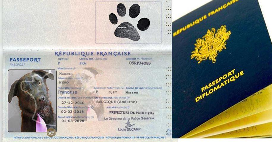 Nouveau scandale : Némo aurait 3 passeports diplomatiques