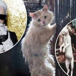 Choupette vendue à un restaurant chinois : le chat de Karl Lagerfeld sera cuisiné pour de riches gourmets asiatiques