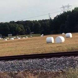 Jura : des chamallows géants issus de l'agriculture biologique
