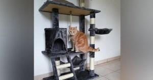 """Des """"arbres à chats"""" qui ne produisent aucun chat : un magasin condamné pour abus de confiance"""