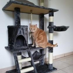 """Des """"arbres à chats"""" qui ne produisaient aucun chat : un magasin condamné pour abus de confiance"""