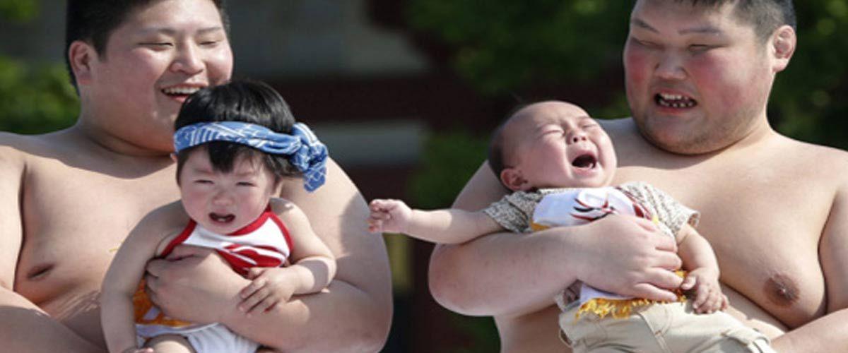 Pour grossir, les Sumos mangent des bébés vivants riches en protéines