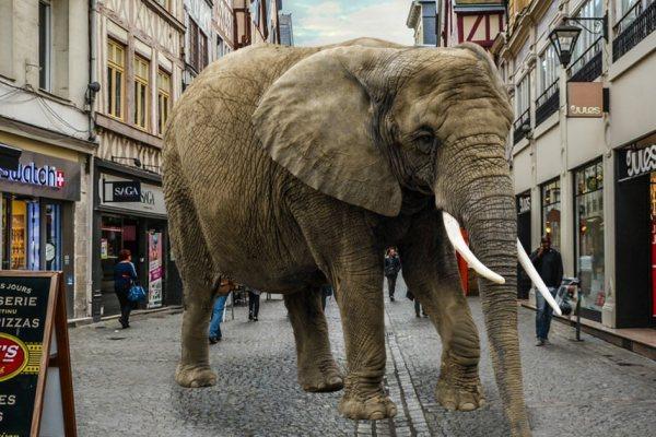 A 3 ans elle libère les animaux d'un cirque en ouvrant leurs cages