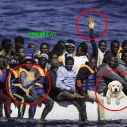 Les migrants mettent des animaux dans leurs bateaux pour apitoyer les Européens