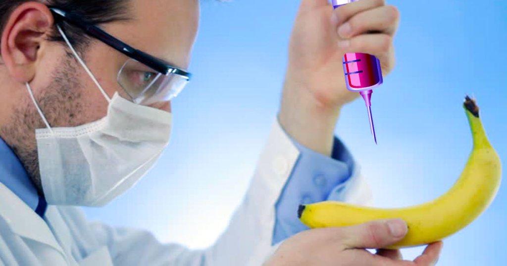 Création d'une variété de bananes qui goûtent le Beaujolais nouveau