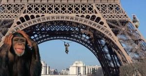 Ensauvagement de la société : des singes aperçus sur la Tour Eiffel